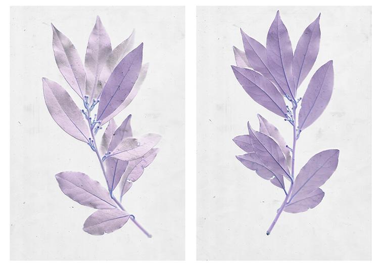 使用扫描术创建植物图像