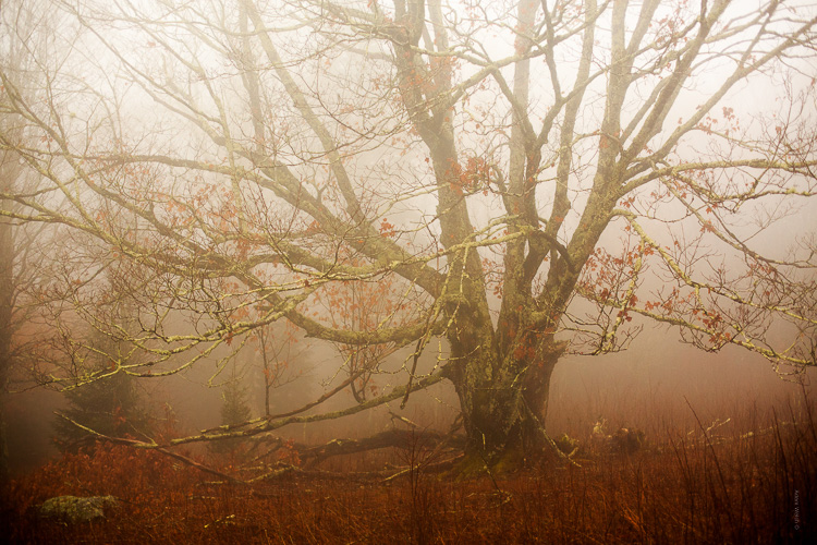 How to Control Mood in Your Foggy Photos - warmer image of a tree