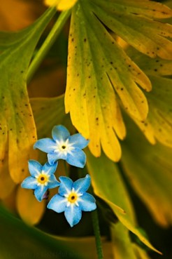 05a_plant-photography-tips.jpg