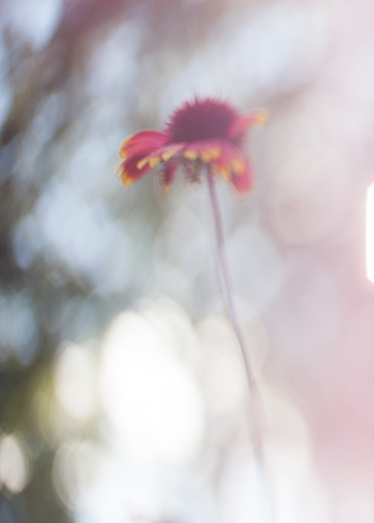 freelensing macro photography bokeh backlit