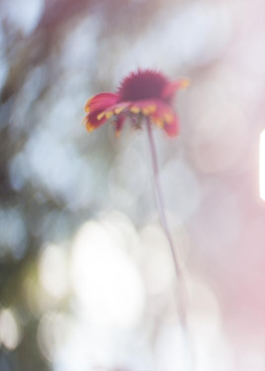 freelensing macro photography bokeh backlit