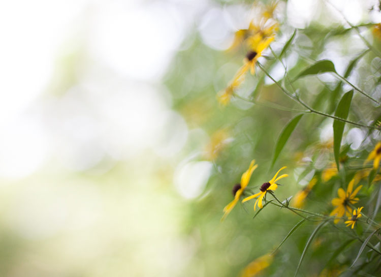 freelensing macro photography bokeh