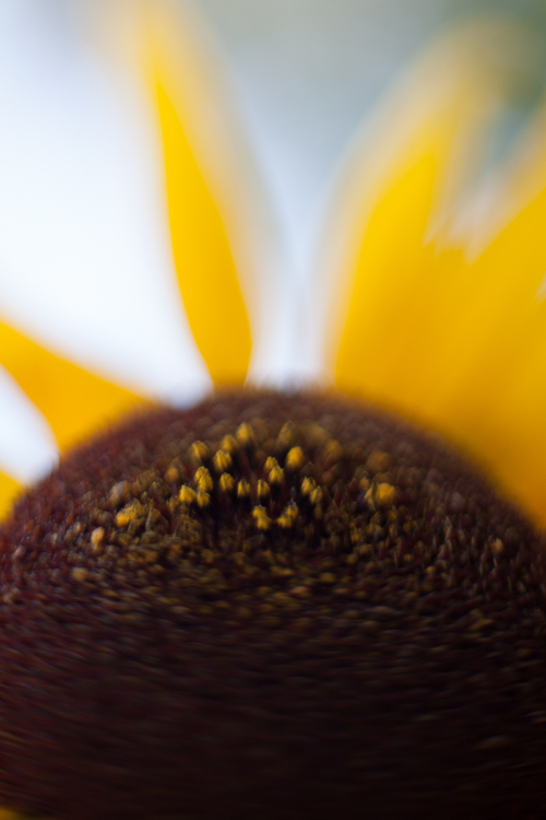 freelensing sunflower macro photography