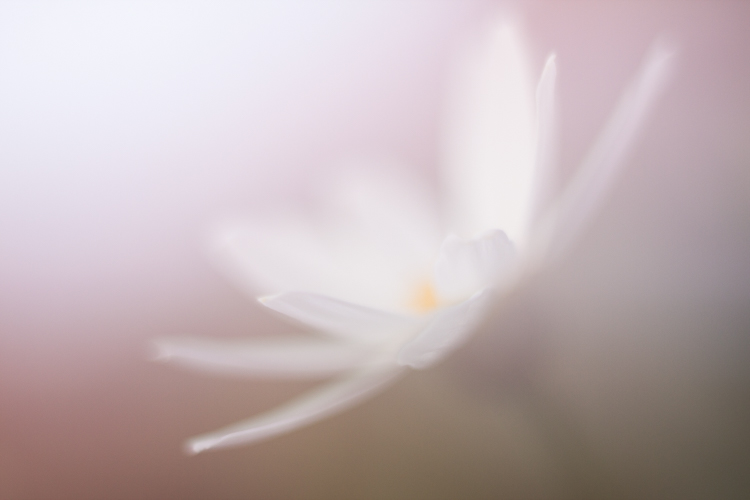 freelensing daisy macro photography