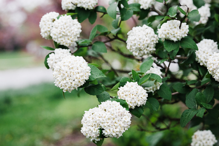 white flowers - 6 Quick Tips for Doing Summer Photography