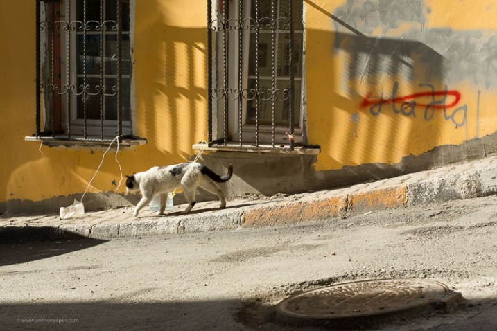 cat on a street scene - How to overcome your technical or artistic shortcomings and improve your photography
