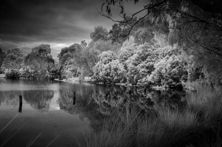 Tips for Converting an Old Camera for Shooting Infrared Photography - b/w of trees and forest in IR