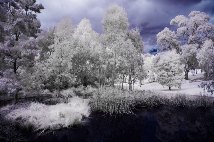 Tips for Converting an Old Camera for Shooting Infrared Photography - color infrared image