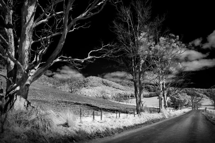 dead trees in IR b/w - Tips for Converting an Old Camera for Shooting Infrared Photography