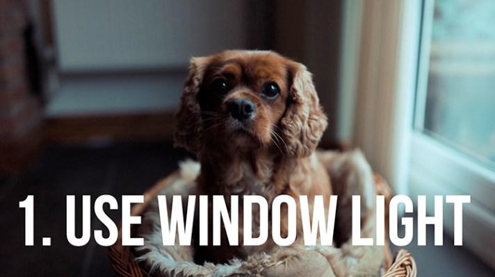 Use window light - 10 Amazing Camera Hacks for Dog Photography