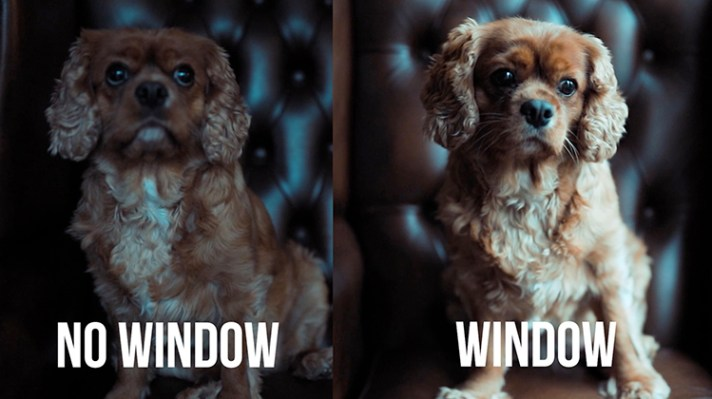 With without window light - 10 Amazing Camera Hacks for Dog Photography