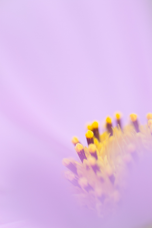 macro photography abstract flower - macro lens