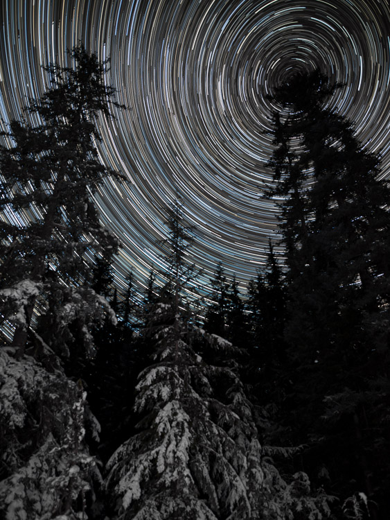 Star Trails, Alaska, evergreen trees - 7 Tips for Shooting and Processing Star Trails
