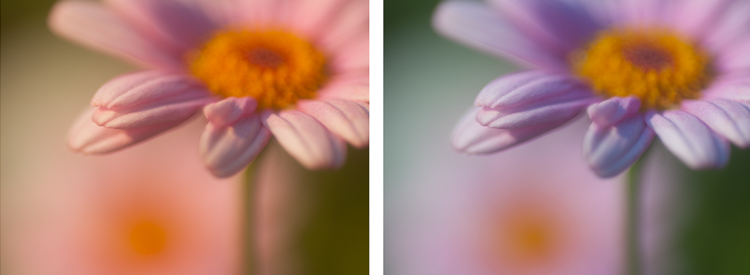 macro photography flower abstract sunset - Post-Processing Workflow