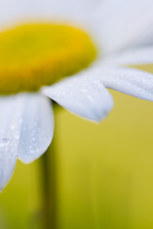 daisy abstract macro photography flower - Post-Processing Workflow