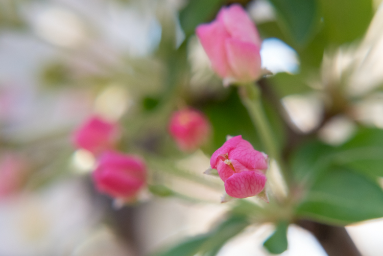 flowers with shallow DoF - Optical Versus Electronic Viewfinders