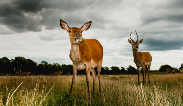 5 Ways to Challenge Yourself as a Wildlife Photographer