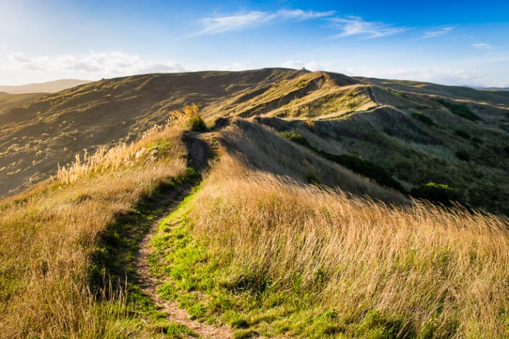 Hiking trails in the hills of Castlepoint