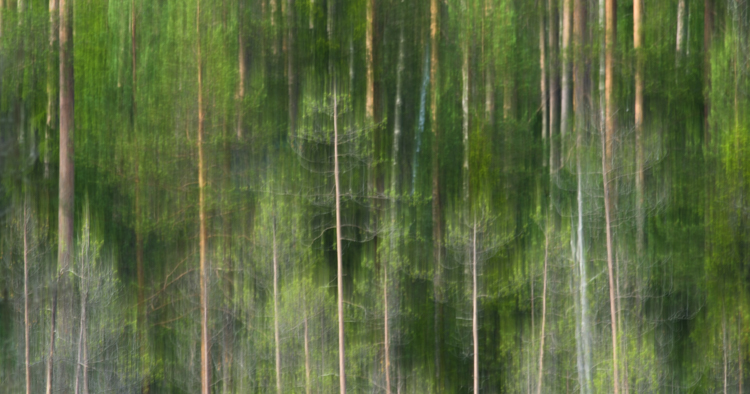 Tree lines - Tips for Photographing Patterns in Nature