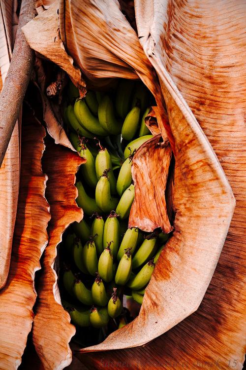 香蕉叶和果实 - 如何在摄影中使用概念对比