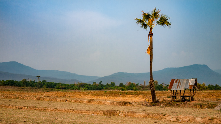 How to Find Inspiration for Your Photography - desert image with one tree