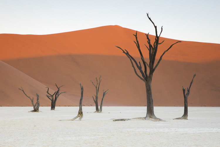 Camel thorn trees Deadvlei Namibia - Take Better Vacation Photos