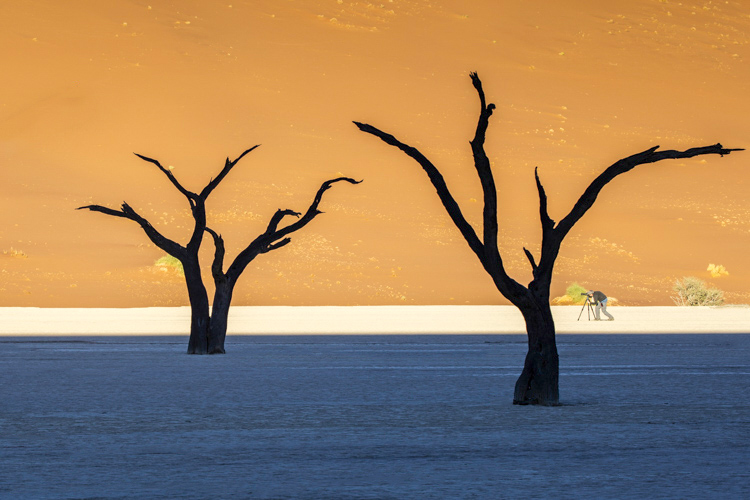 better vacation photos - trees in Namibia