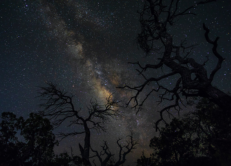 How to Choose a Lens for Night Sky Photography - Milky Way and spooky trees