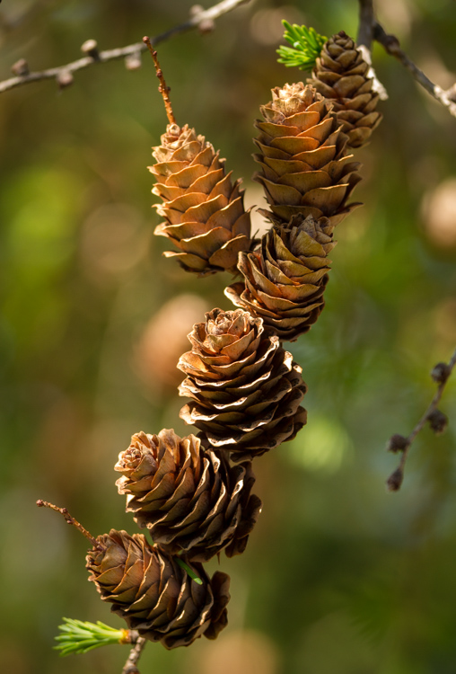 pine cones on a tree - 9 Ways to Create Balance in Your Photography