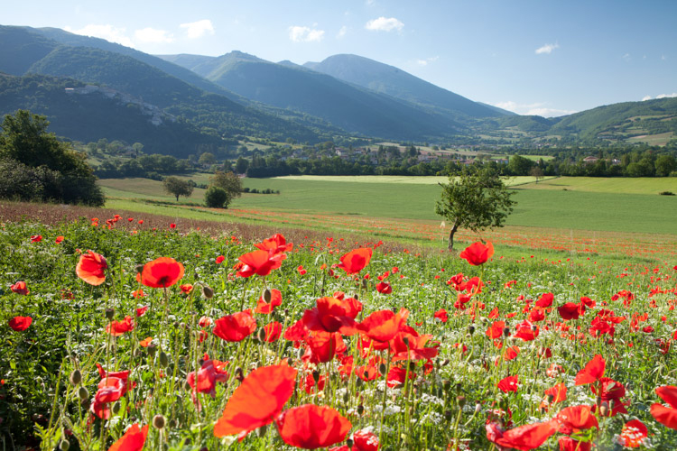 poppy field and mountains - 5 Landscape Photography Mistakes That Keep Your Images From Standing Out