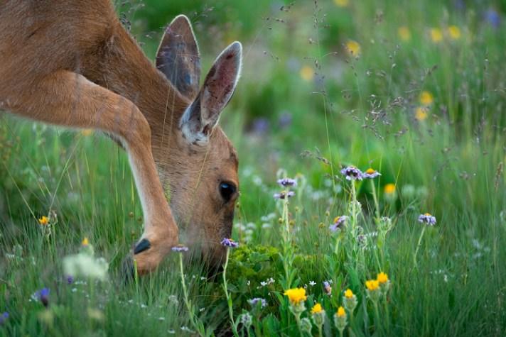 在一个字段中的鹿 - 使用不同的快门速度为风景摄影