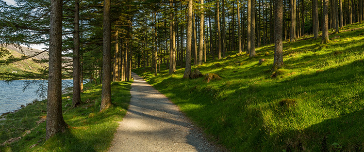 Create Better Panoramas - wide shot of a path in the forest