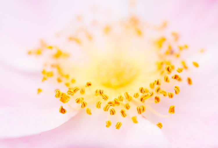 flower rose - Common Macro Photography Mistakes