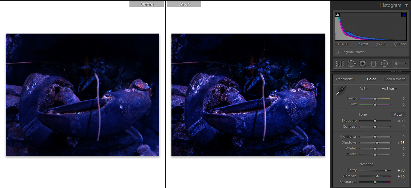 Screenshot of adjustments made in Lightroom. How to Take Clear and Creative Photos at Aquariums