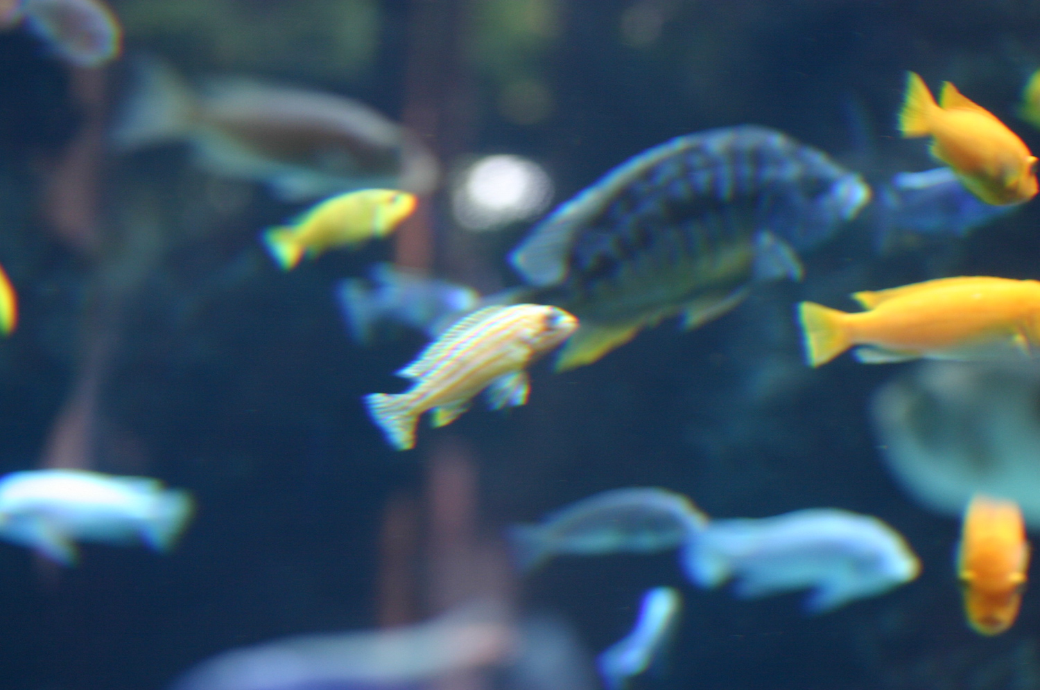 A photo with blurry fish - How to Take Clear and Creative Photos at Aquariums