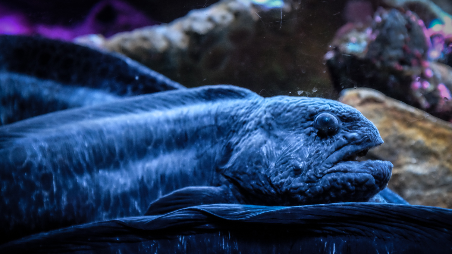 Photo of a strange fish (eel). How to Take Clear and Creative Photos at Aquariums