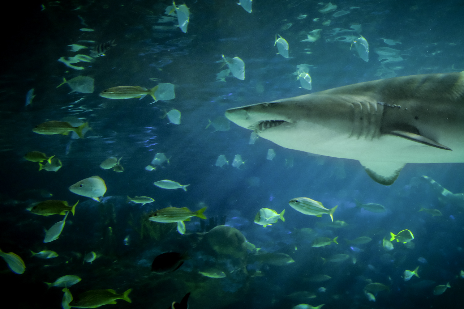 A photo of a shark swimming with fish. How to Take Clear and Creative Photos at Aquariums