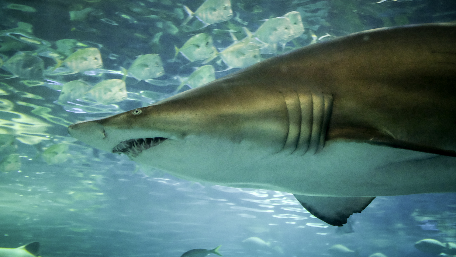 Close-up photo of a shark - How to Take Clear and Creative Photos at Aquariums