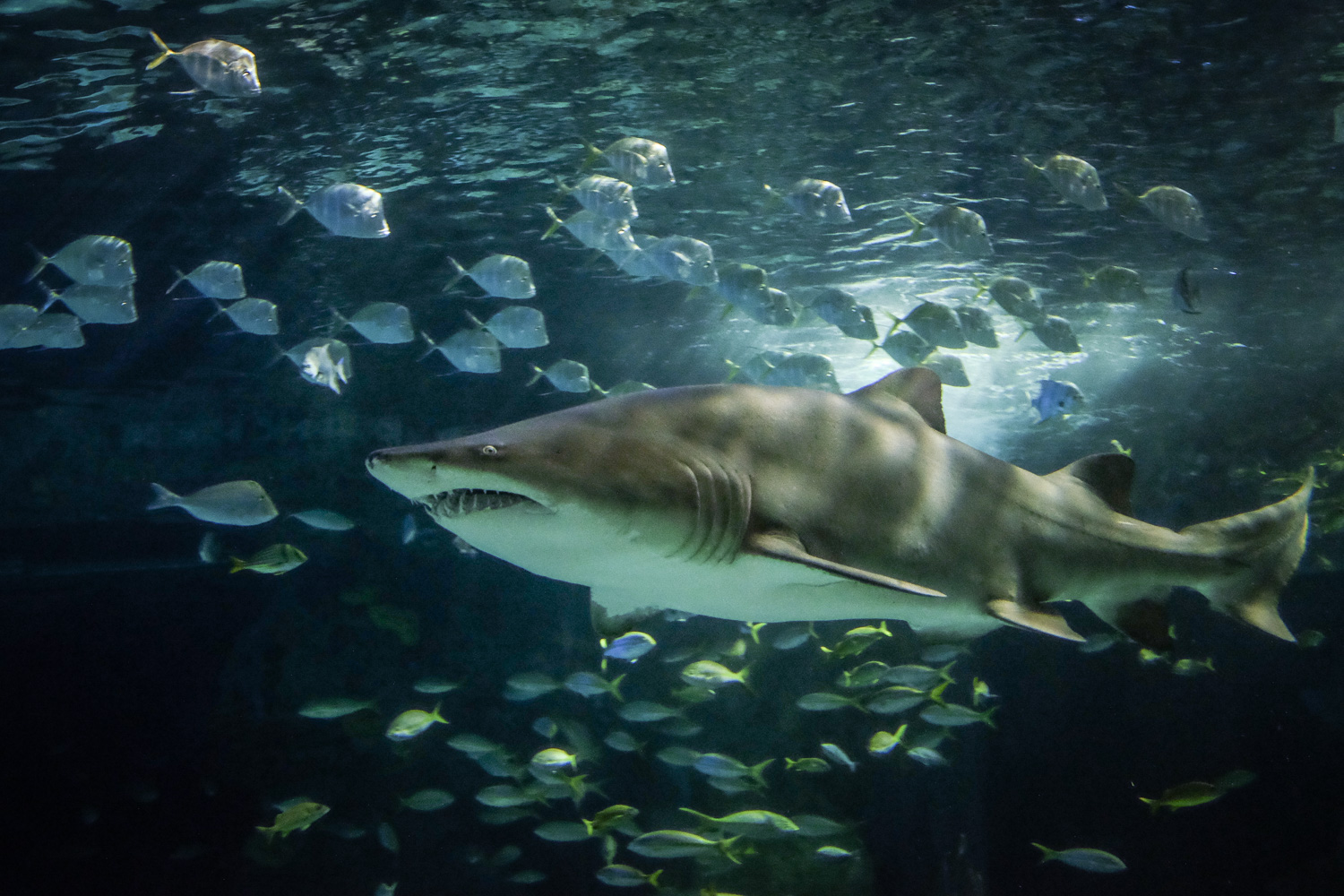 A shark with fish. How to Take Clear and Creative Photos at Aquariums