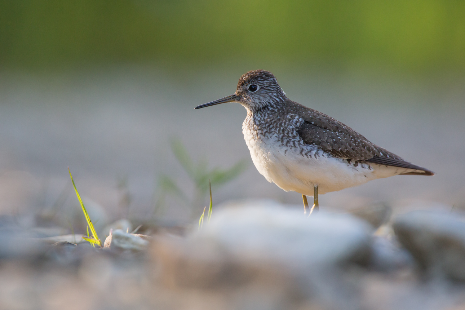 A Guide to Photographing Birds and Wildlife in a Wetland Area - bird with long beak