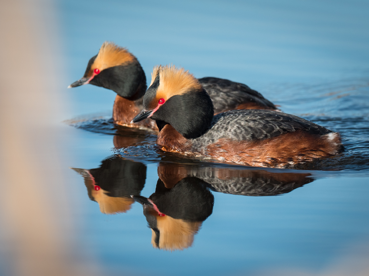 A Guide to Photographing Birds and Wildlife in a Wetland Area - ducks in the water