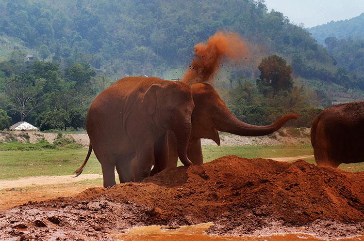 Chimping Tutorial the Decisive Moment - elephant