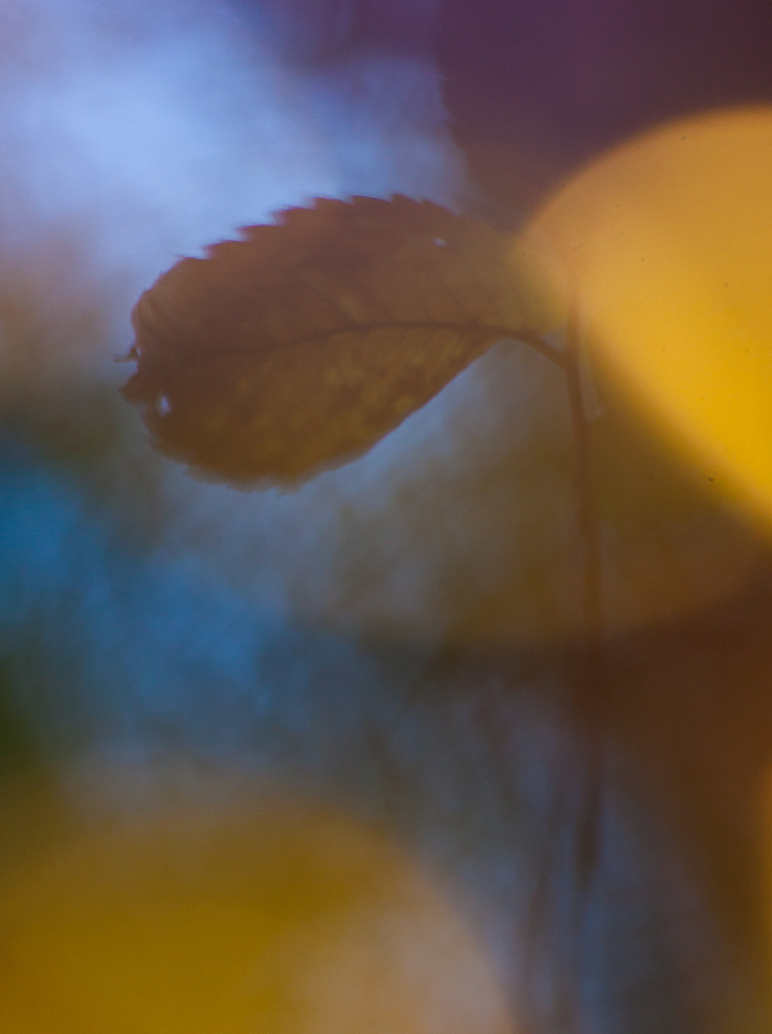 fairy lights photography leaves autumn