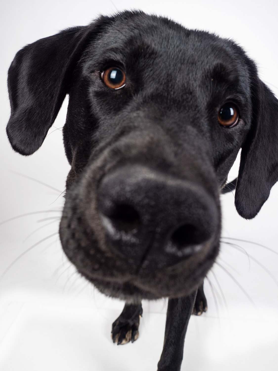 Image: Get the whole face sharp. This image doesn't work because of the cropped of paw and out...