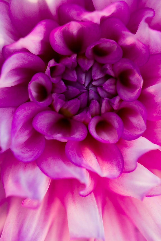 macro photography bokeh flower dahlia - Types of Lighting