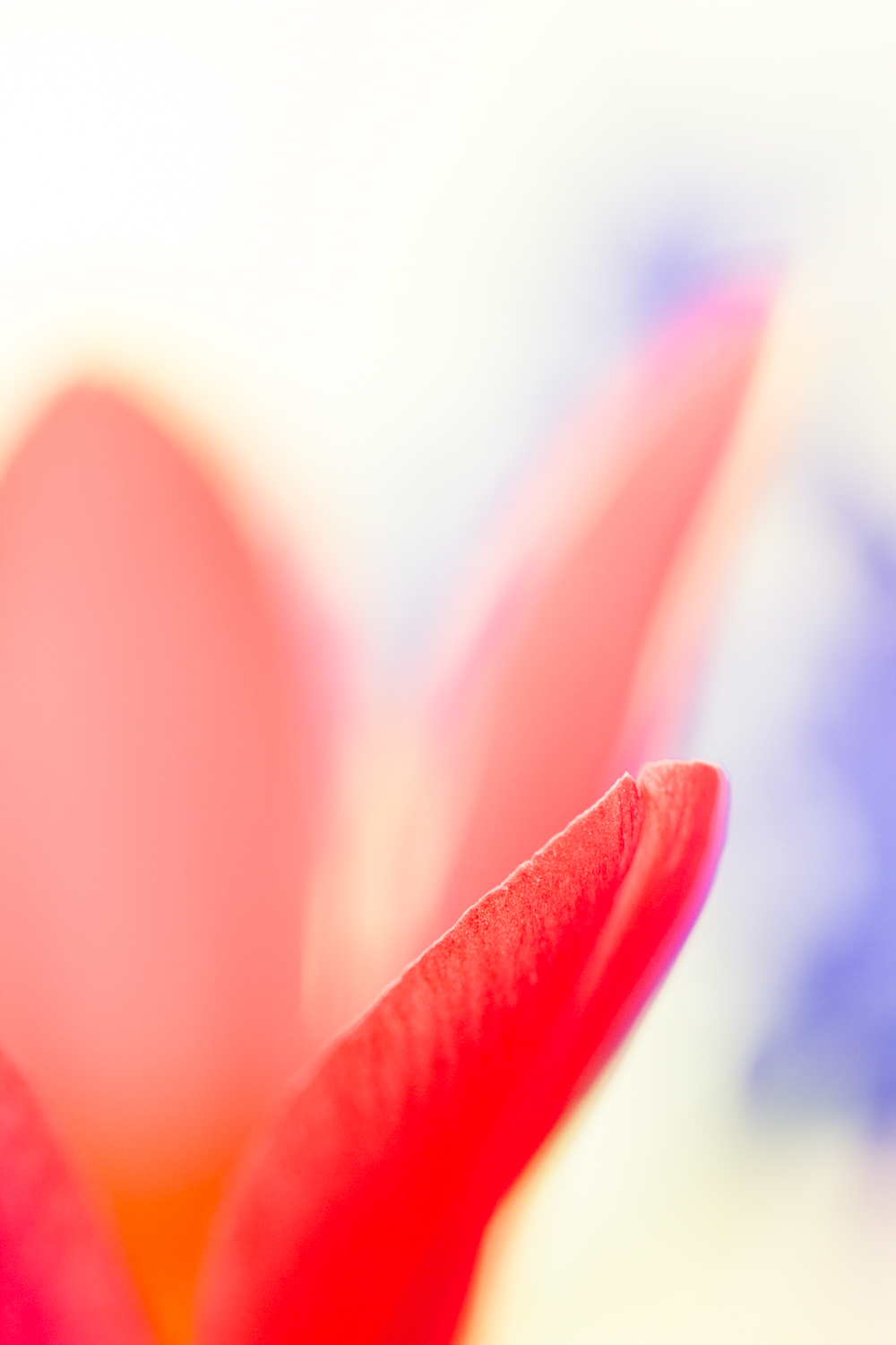 macro flower bokeh photography tulip - Four Ways to Generate Stunning Bokeh in Your Images