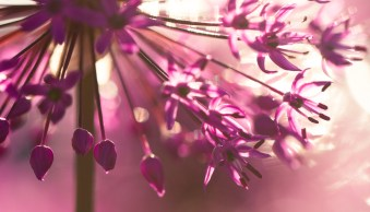 Four Ways to Generate Stunning Bokeh in Your Images