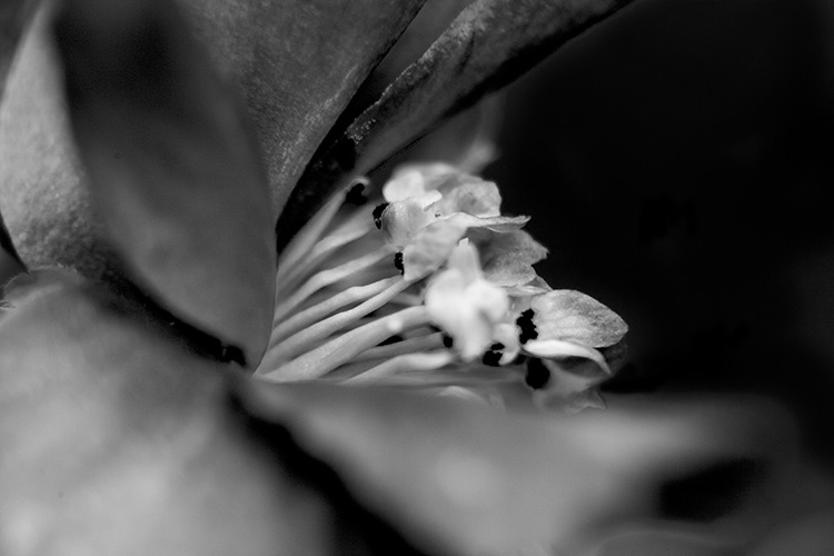 macro flower - How to Find Opportunities for Abstract Photography Anywhere