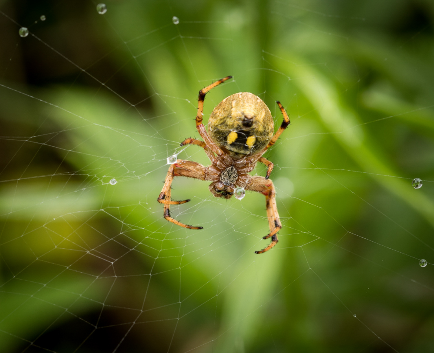 How Aesthetic Differs From Photographic Style And Why it Matters - spider in a web close up