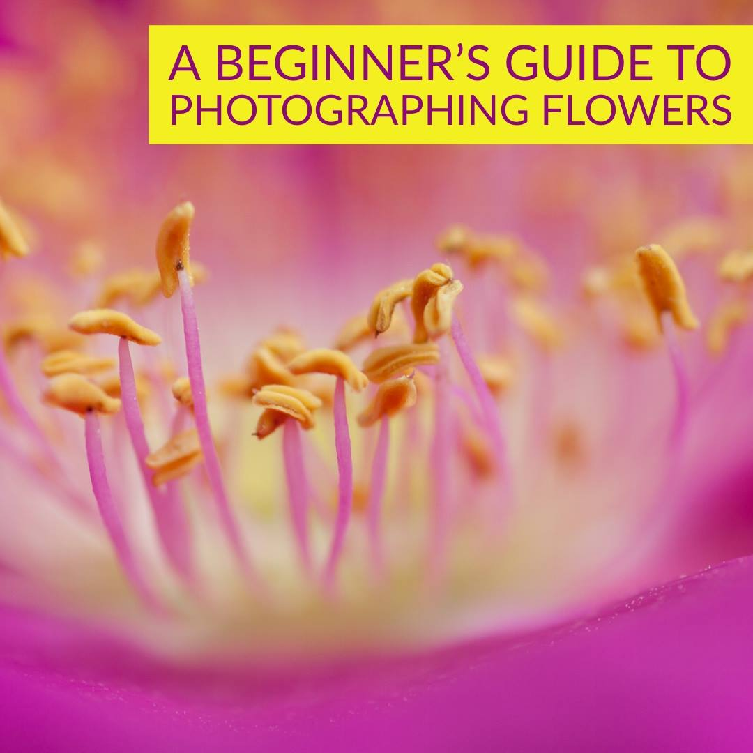 A Beginner's Guide to Photographing Flowers
